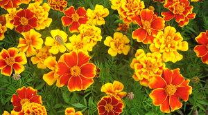 Adoptujte květinu nebo keř