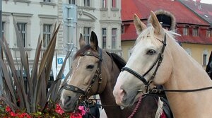 Zapojte se do průvodu s koňmi