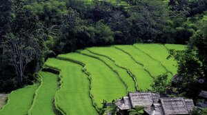 Jiří Kolbaba - Ostrov Bali - můj domov (vydáno 11. 11.)
