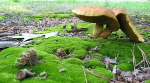 Na houby s odborným výkladem