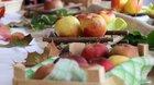 Plody dubnických záhrad 2021