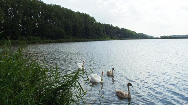 Levické rybníky