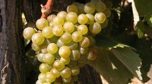 Vinič a víno, história a súčasnosť