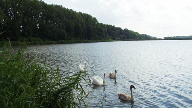 Levice fishponds